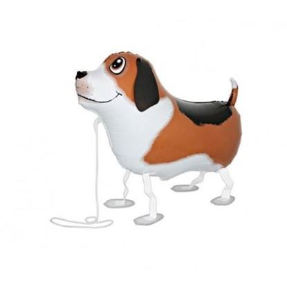 Imagens de Cão Beagle